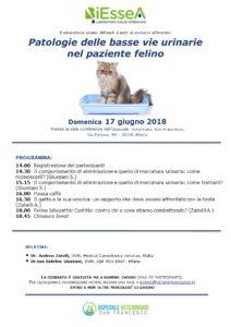 Patologie delle basse vie urinarie nel paziente felino
