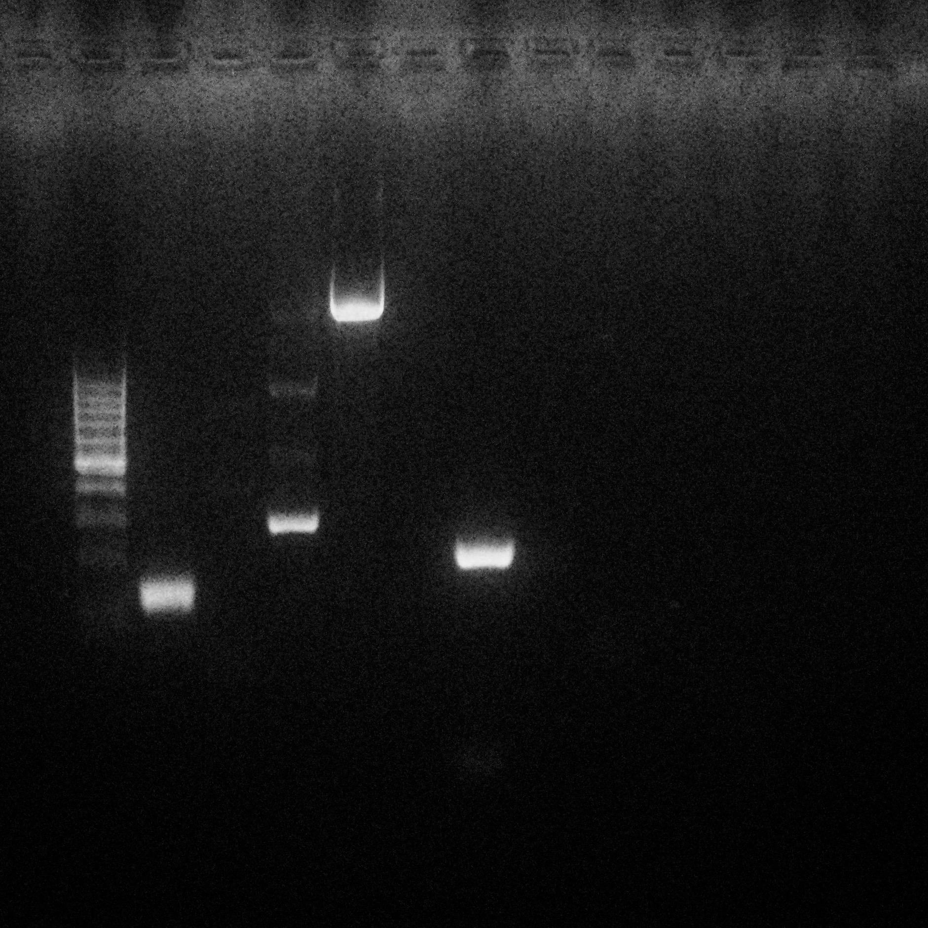 Test biologia molecolare